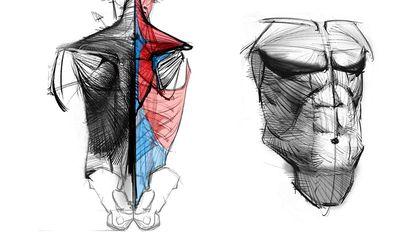 艺用人体解剖实用教学 上集 躯干篇