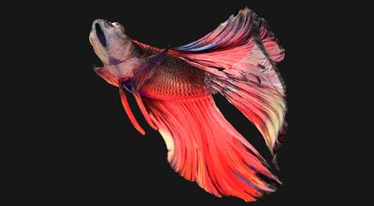 灵动的鱼3Ds Max&Redshift 静帧案例教学