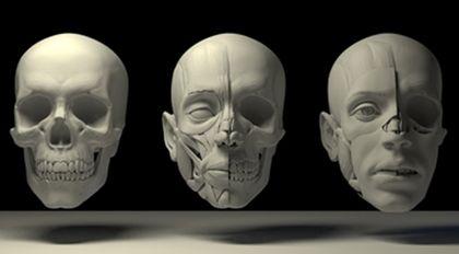 太极讲人体:艺用人体结构造型公开课