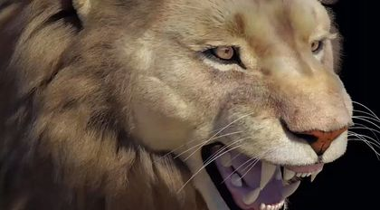 xgen狮子头部毛发案例教学