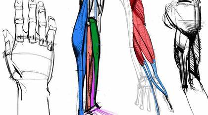 艺用人体解剖实用教学 下集 四肢篇