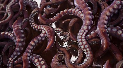 Substance Designer高级造型章鱼模型制作案例教学