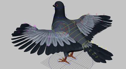 Maya影视级鸽子鸟类绑定案例教学